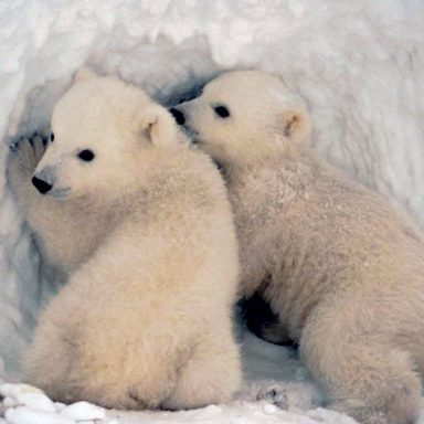Arctic Biodiversity at Risk as World Overshoots Climate Planetary Boundary
