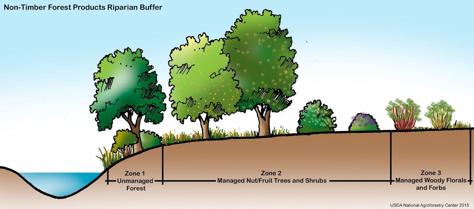 Riparian Buffer, Agroforestry