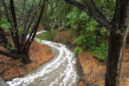 Strawberry Creek, Berkley