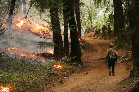 zombie forest fires fires, climate change, new study, monitoring