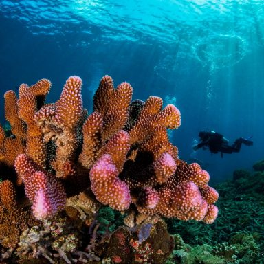 New Coral Reef Restoration Tech Aims to Reverse Climate Change Damage