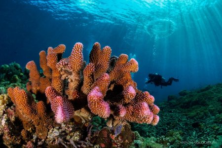 coral reef damage, restoration technology, climate change