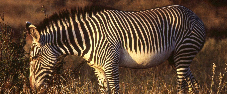 wildlife, Kenya, census, climate change, wildlife population