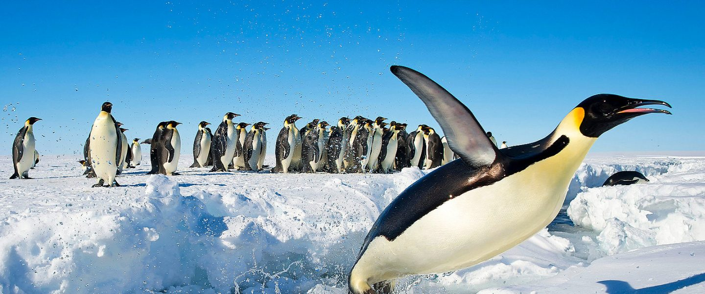 World Oceans Day, fifth ocean, Southern Ocean, antarctica, climate change