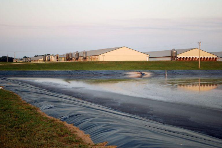 manure lagoon, pig farm, pork, hog, Des Moines