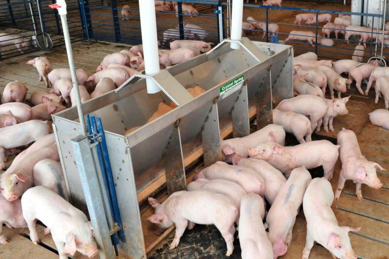 pig farm, pork, hog, Des Moines