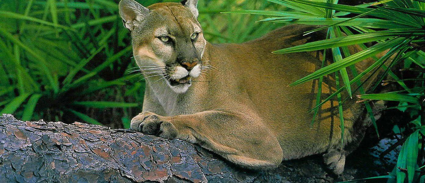 Florida, wildlife corridor, new legislation, environmental protection