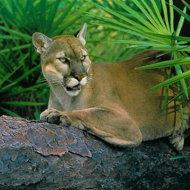 Florida Enacts Sweeping Law to Protect Wildlife Corridors