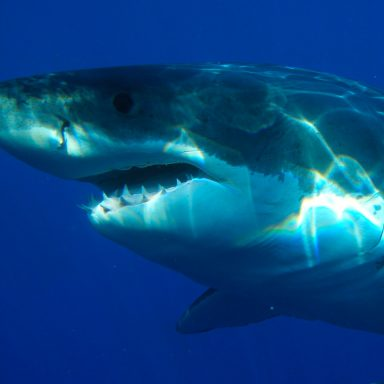 Shark Sightings Off NY's Coast Are Linked to Climate Change, Scientists Say