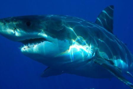 New York, shark sightings, Jones Beach, climate change, warming oceans