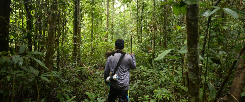 Amazon jungle, deforestation, technology, saving trees, indigenous people