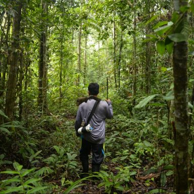 Technology Boosts Efforts to Curb Tree Loss in Amazon: Study