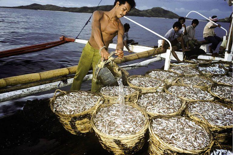 Fishermen, Philippines, Overfishing