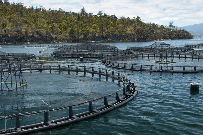 Salmon farming, Tasmania, Australia