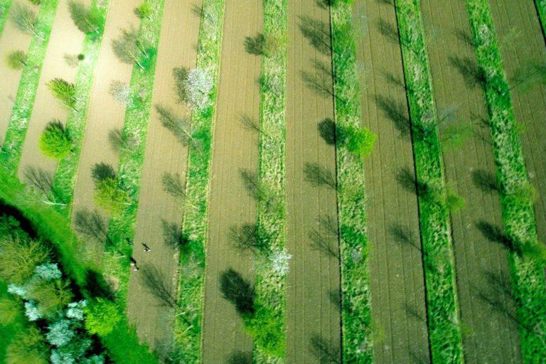 Wakelyns Agroforestry, Suffolk