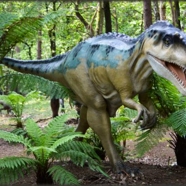 Fossil Leaves May Reveal Climate in Last Era of Dinosaurs
