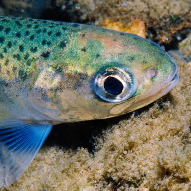 Genetic Mapping Boosts Hopes for Restoring Prized Lake Trout