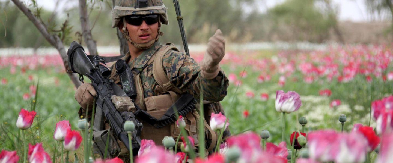 Regimental Combat Team 8, poppy field