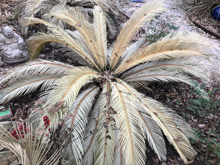 palm plant, bleached