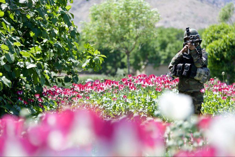 Afghan, commando, poppy field, Khugyani