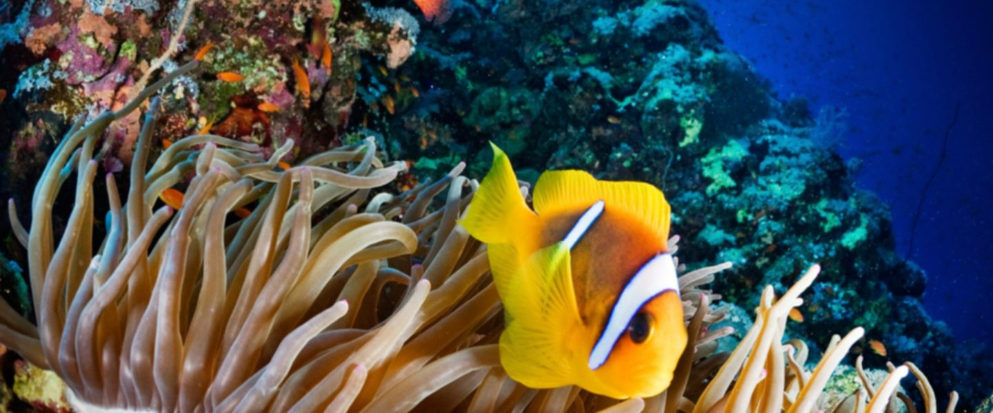climate change, coral reef damage, detailed global online map, satellite images
