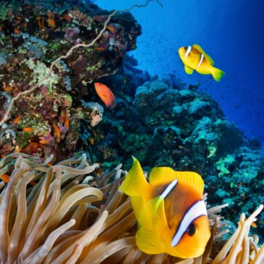 Researchers Complete First Detailed Map of Global Coral Reefs