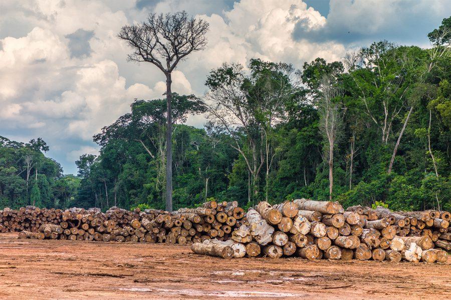 Logging, Brazil, Rondonia