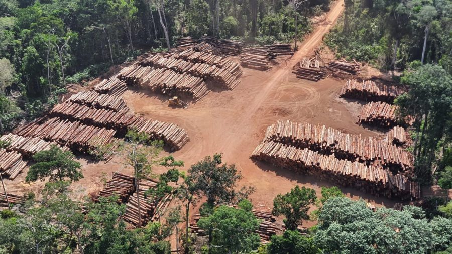 illegal timber, seizure, Brazil, Amazon
