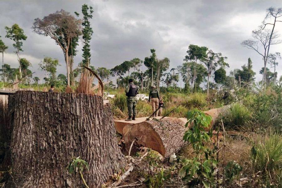 Pará, Brazil, timber seizure