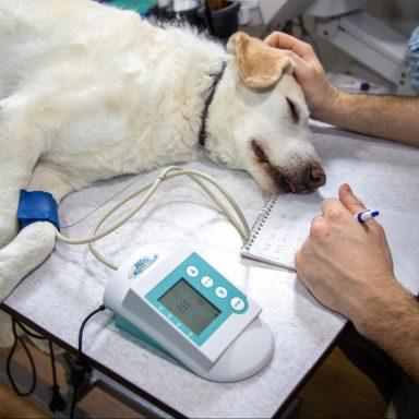 dog, veterinary clinic, COVID-19